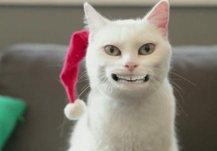 spot-walmart-yodeling-cat