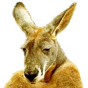 https://hostr.co/file/970/AawEjLv0kzaB/kangurek.png