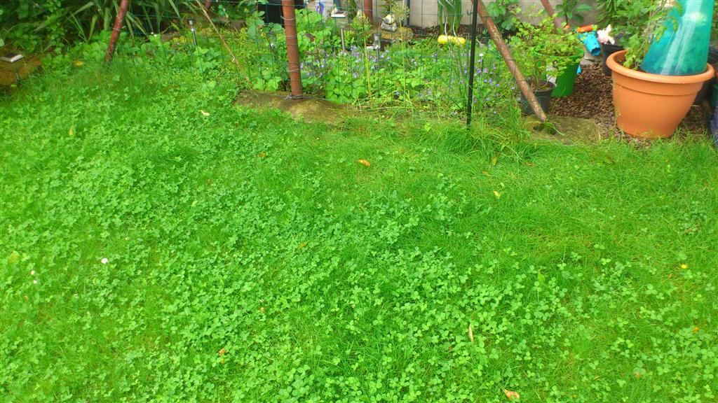 Comment cr er un massif dans la continuit au jardin forum de jardinage - Comment planter du gazon ...
