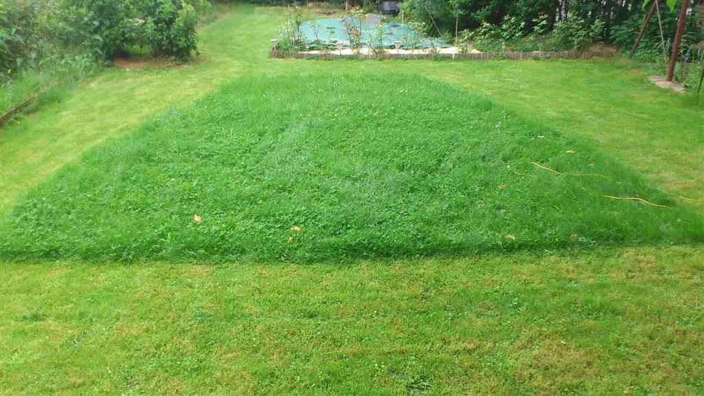 Comment cr er un massif dans la continuit au jardin forum de jardinage - Creer un massif ...